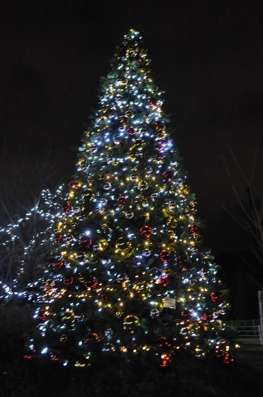 目玉のクリスマスツリー