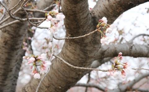 平成24年度生命科学科のお花見会について