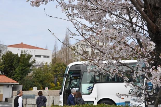 バスと桜の木