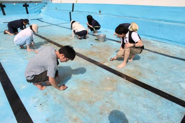 プールを清掃する学生さん