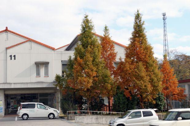 11号館前の紅葉した木