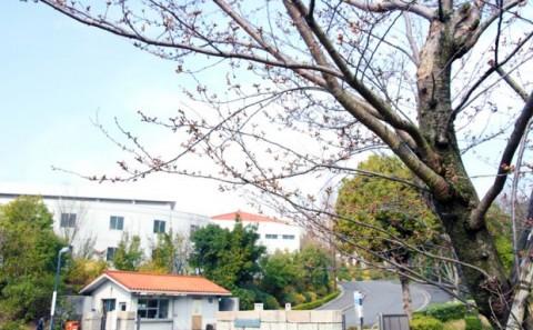 キャンパスは春色、新入生を迎える準備が整っています。
