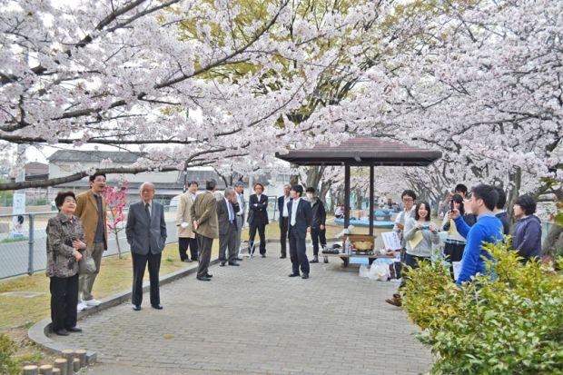 割烹原田前公園の桜