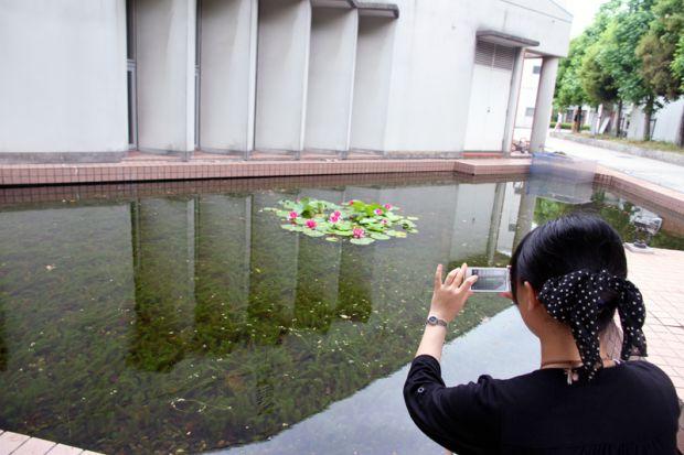 スマートフォンで蓮の花を撮影