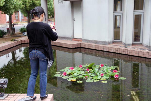 蓮の花を撮影する学生さん