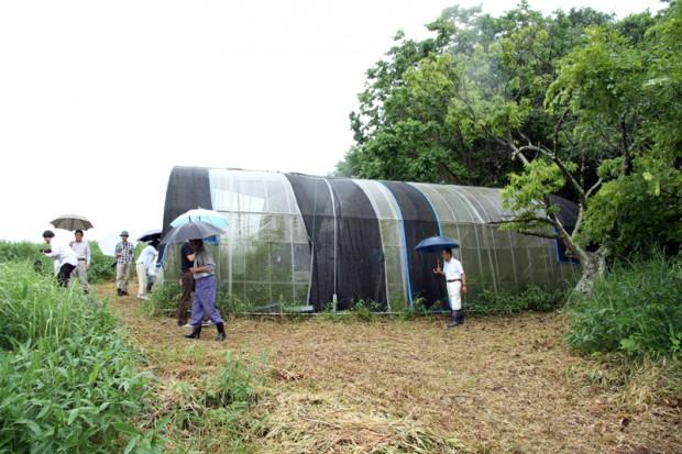 ウスイロヒョウモンモドキが飼育されているビニールハウス