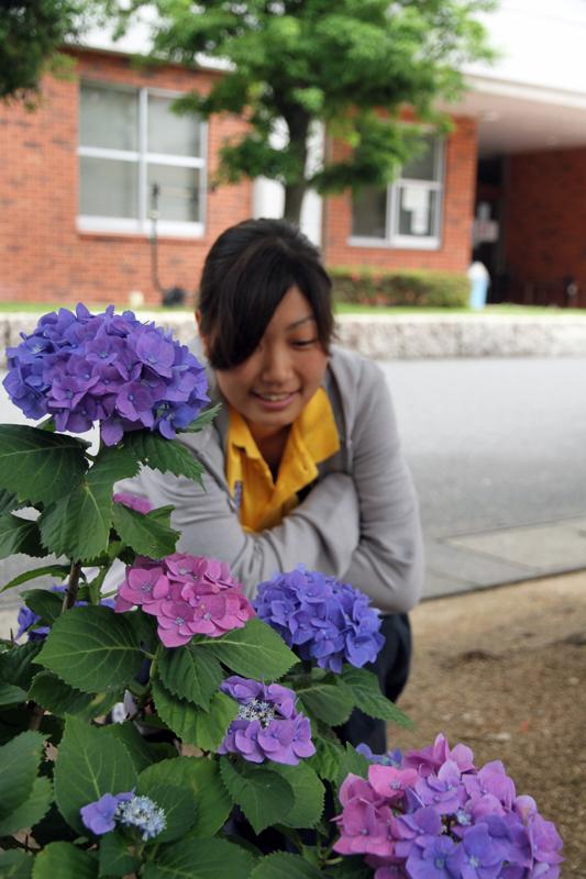 紫陽花を見る女子学生