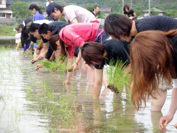 田植え体験する学生
