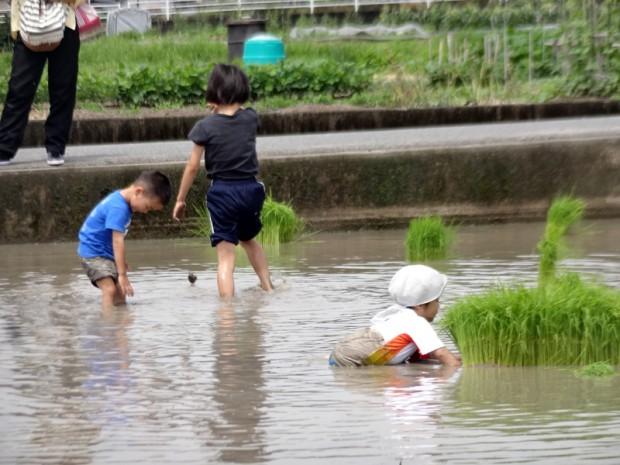 子供たちも田植え