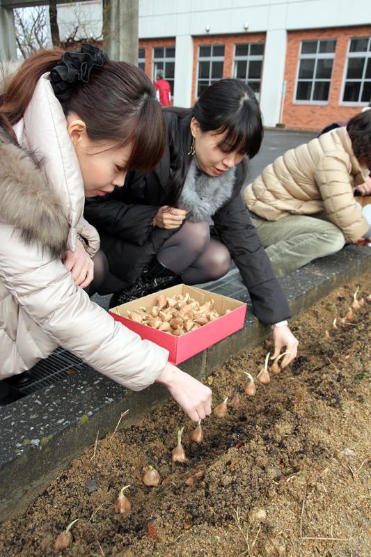 フリージアの球根を植える学生