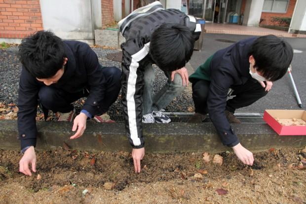球根を植える男子学生