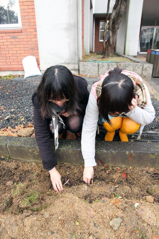 フリージアの球根を植える女子学生