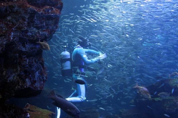 ダイバーに寄ってくる魚の群れ