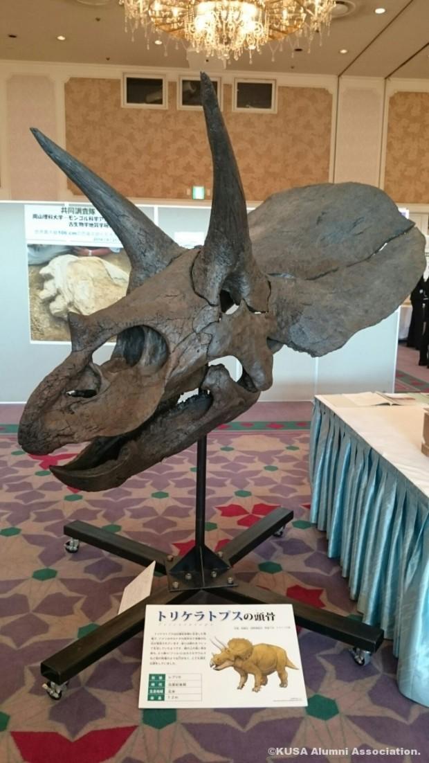 トリケラトプス頭骨の化石