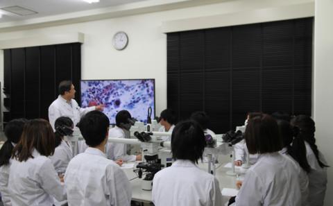 速報!細胞検査士合格率100%!!(生命医科学科からのお知らせ2019.12.12)